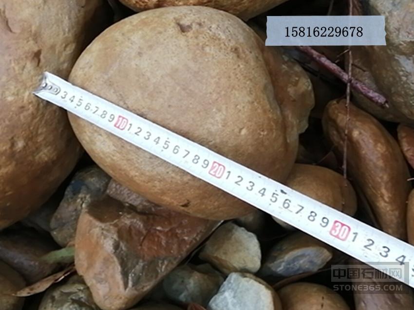 �Z卵石的堆�e密度 天然�Z卵石
