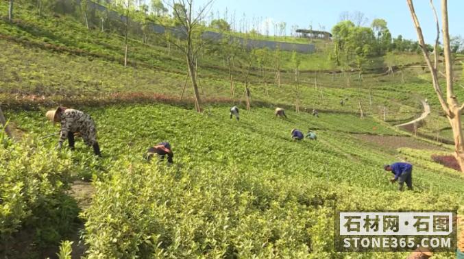 知难而进!南部(岑溪)石材循环生态产业园快速推动 经济提速开展