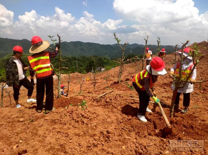 贵州省清镇市推动生态修正 抛弃矿山重披绿装