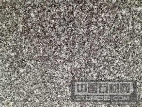 广西钟山绿(又名广西钟山青)5