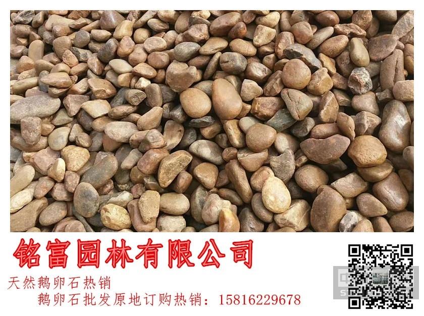 广东鹅卵石最大供应商