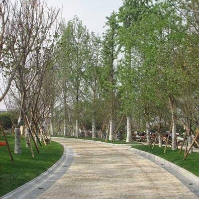 湖边公园人行道