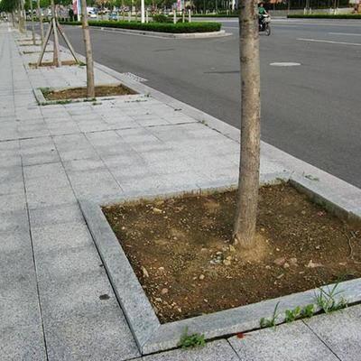 五莲红树池石工程案例