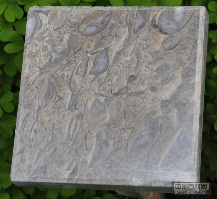 古贝类化石